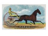Lantern Press - Rarus Brand Cigar Box Label, Horse Racing - Reprodüksiyon