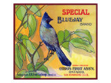 San Bernardino, California, Special Bluejay Brand Citrus Label Prints by  Lantern Press