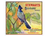San Bernardino, California, Stewarts Bluejay Brand Citrus Label Print by  Lantern Press
