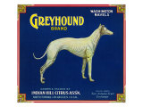 North Pomona, California, Greyhound Brand Citrus Label Art by  Lantern Press