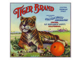 Colton, California, Tiger Brand Citrus Label Art by  Lantern Press
