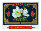 Magnolia Brand Cigar Box Label Posters