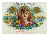 Havana Rose Brand Cigar Box Label Posters