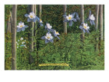 Colorado, View of Blooming Columbines and Aspen Trees Prints by  Lantern Press