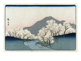 Grove of Cherry Trees, Japanese Wood-Cut Print Prints by  Lantern Press
