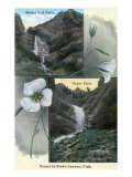 Provo Canyon, Utah, Views of Bridal Veil and Upper Falls with Flowers Art by  Lantern Press