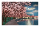 Washington DC, Potomac Park and Blossoming Cherry Trees Scene at Night Prints by  Lantern Press