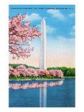 Washington DC, View of the Washington Monument through Blossoming Cherry Trees Prints