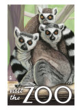 Visit the Zoo, Ring Tailed Lemurs Posters by  Lantern Press