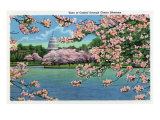 Washington DC, Vista of the Capitol through the Cherry Blossoms Poster