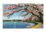 Washington DC, View of the Washington Monument with Blossoming Cherry Trees Posters