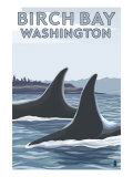 Birch Bay, Washington, Orca Fins Prints by  Lantern Press