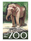 Visit the Zoo, Asian Elephant Poster by  Lantern Press