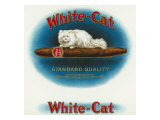 White-Cat Brand Cigar Box Label, Persian Cat Print by  Lantern Press