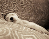 Dog Tired Print by Jim Dratfield