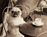 Cafe Pug Kunstdrucke von Jim Dratfield