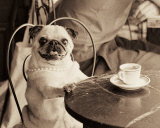 Cafe Pug Láminas por Jim Dratfield