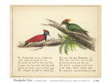 Woodpecker Verse Posters par Nathaniel Tweet