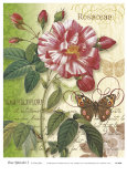 Rose Splendor I Print by Ching Han