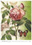 Rose Splendor II Prints by Ching Han