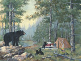 Bears' Campsite Posters by Anita Phillips