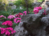 Flowers and Rocks in Traditional Chinese Garden, China Photographic Print by Keren Su