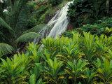 Shaw Park Gardens, Jamaica, Caribbean Fotodruck von Robin Hill