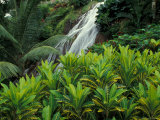 Shaw Park Gardens, Jamaica, Caribbean Photographic Print by Robin Hill