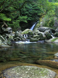Shiratani Unsuikyo, Yakushima, Kagoshima, Japan Photographic Print by Rob Tilley