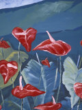 Anthurium Mural in Jardin de Balata, Martinique, Caribbean Photographic Print by Walter Bibikow