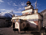 Stupa With Yaks at Dolpo, Nepal Photographic Print by Vassi Koutsaftis