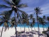 Palm Trees on St. Philip, Barbados, Caribbean Photographie par Stuart Westmoreland