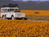 4X4 in Meadow of Daisies, South Africa Fotografiskt tryck av Theo Allofs