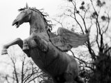 Winged Horse Statue, Mirabellgarten, Salzburg, Austria Photographic Print by Walter Bibikow