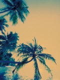 Palm Trees on Felidu Atoll, Maldives Photographic Print by Stuart Westmoreland