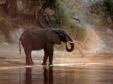Elephant at Water Hole, South Africa Photographic Print by Paul Souders