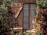 House with Summer Roses, Vaucluse, France Photographic Print by Walter Bibikow