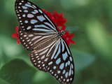Butterfly World, Ft Lauderdale, Florida, USA Photographic Print by Michele Westmorland