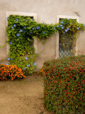 Flowers Along Stucco Building, Burgundy, France Photographic Print by Lisa S. Engelbrecht