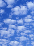 Cumulus Cloud Pattern Photographic Print by Adam Jones