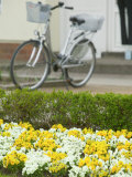 Flowers and Bicycle, Warnemunde, Germany Photographic Print by Russell Young