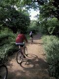 Epping Forest Bikers, Essex, England Photographic Print by Nik Wheeler