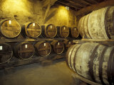 Aging of Armagnac in Gascony Oak Barrels, Aquitania, France Photographic Print by Michele Molinari