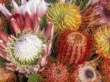 Protia Flower Design, Maui, Hawaii, USA Valokuvavedos tekijänä Darrell Gulin