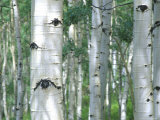 Julie Eggers - Aspen Grove, Colorado, USA - Fotografik Baskı