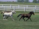 Thoroughbred Horses Running, Kentucky Horse Park, Lexington, Kentucky, USA Photographic Print by Adam Jones