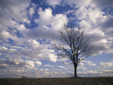 Single Tree and Clouds, Shelby County, Kentucky, USA Photographic Print by Adam Jones
