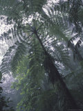 Monteverde Cloud Forest, Costa Rica Photographic Print by Michele Westmorland