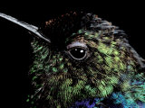 Hummingbird Resting, Barro Colorado Island, Panama Photographic Print by Christian Ziegler