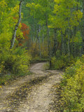 Autumn Colors and Road in Kebler Pass, Colorado, USA Photographic Print by Julie Eggers